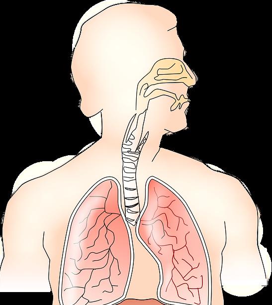 Vias respiratorias